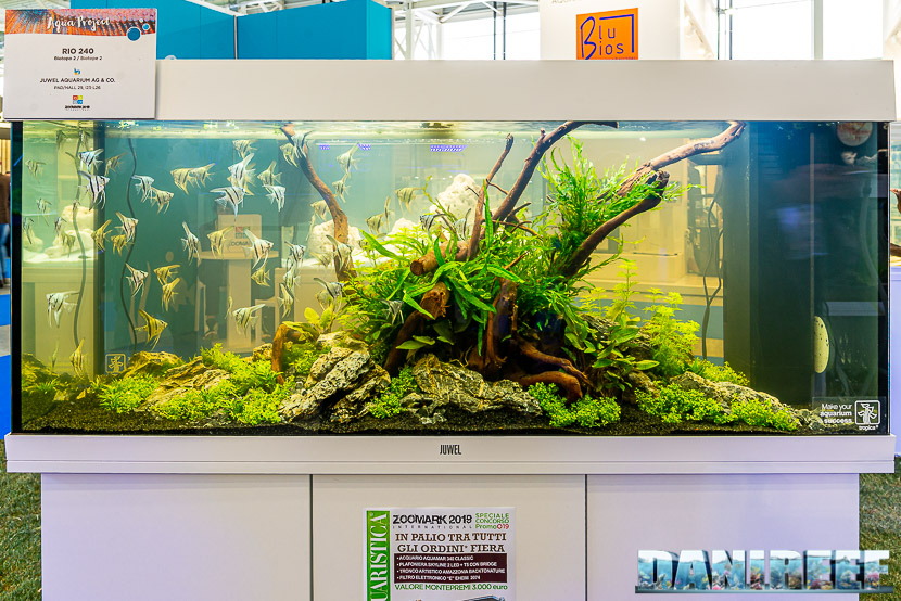 Acquario biotopo con pterophyllum scalari in mostra all'Acqua Project 2019 dello Zoomark