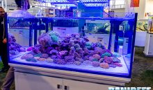 Zoomark 2019: Acquari dolci e marini nel contest Aqua Project 2019