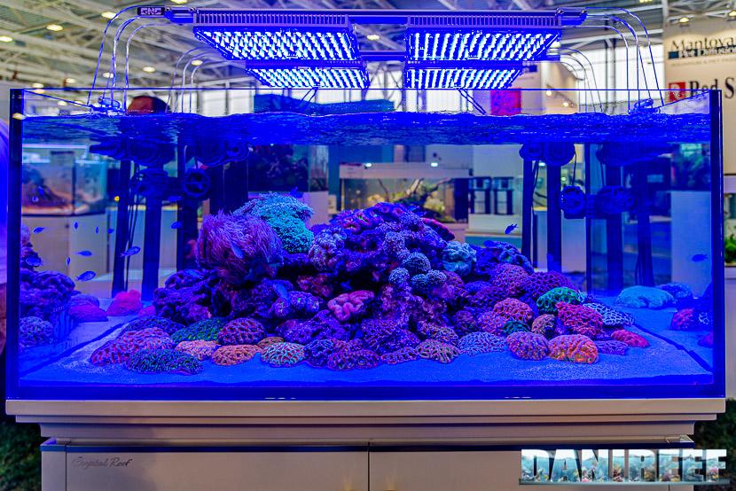 Acquario marino in mostra all'Acqua Project 2019 dello Zoomark