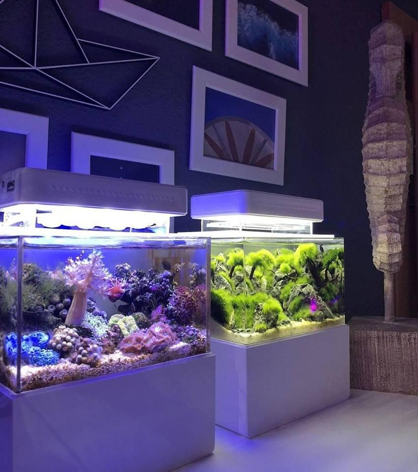 Mini Complete Tank, il più piccolo acquario del mondo