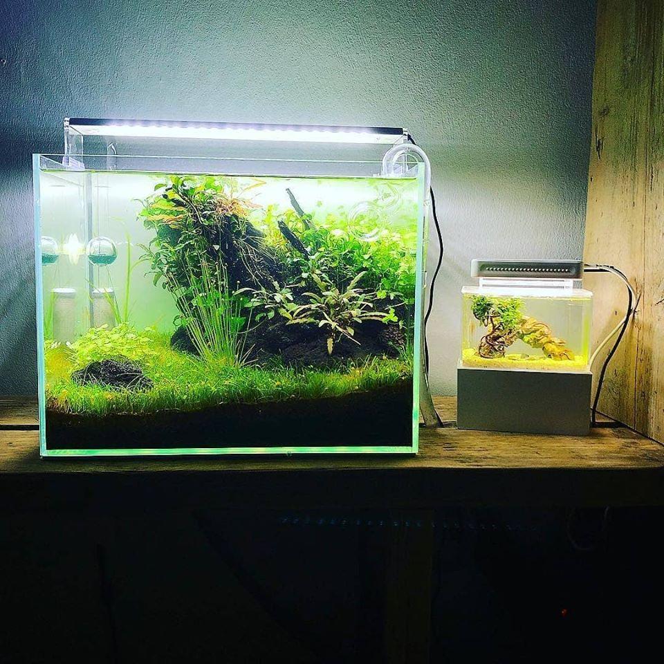 Mini Complete Tank, il più piccolo acquario dolce del mondo