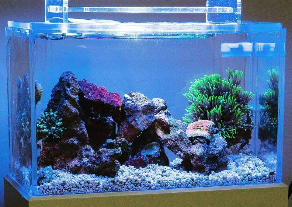 Mini Complete Tank, il più piccolo acquario marino del mondo