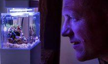 Mini complete tank: il più piccolo acquario del mondo