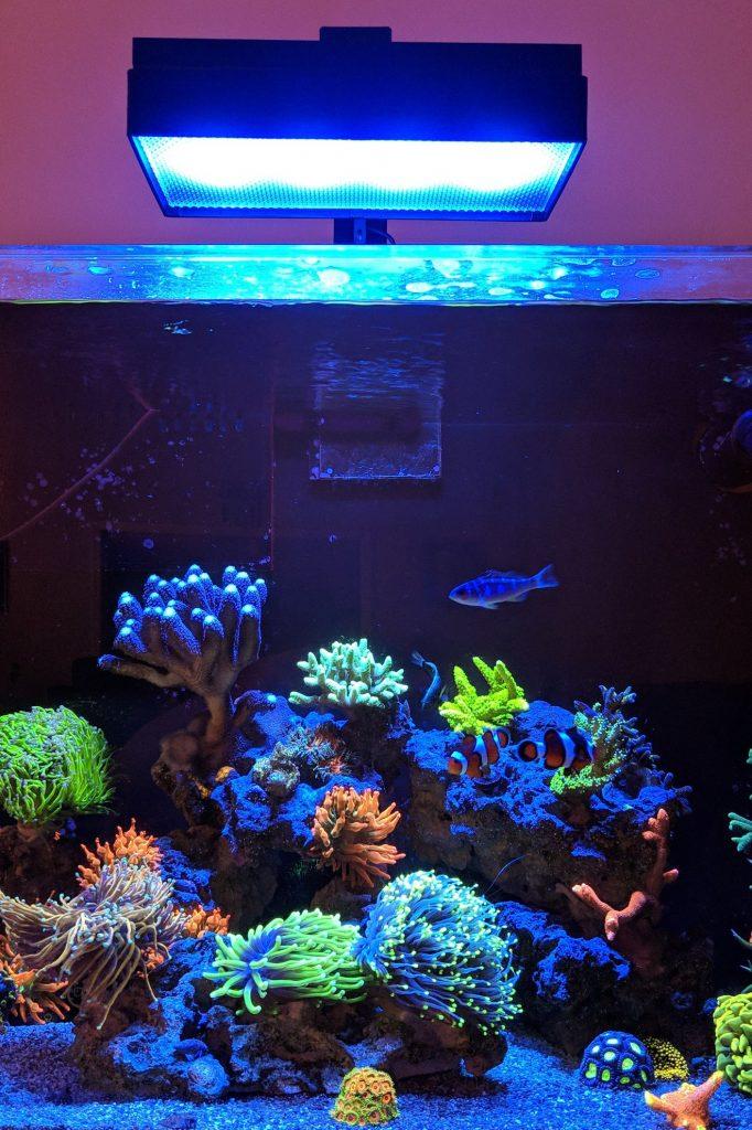 Diffusore 3D Reefing's per plafoniere Aqua Illumination su minireef