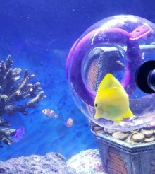 Bubble Trap la trappola per pesci originale e dal risultato assicurato
