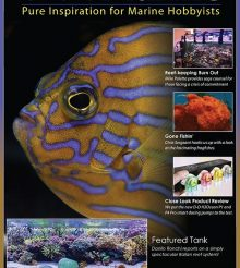 Ultramarine Magazine n.76 is on newsstand with Carlo Mondaini aquarium
