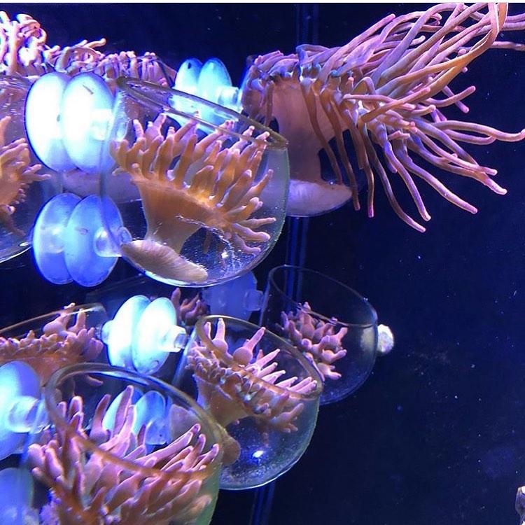 Set di The Coral Tamer