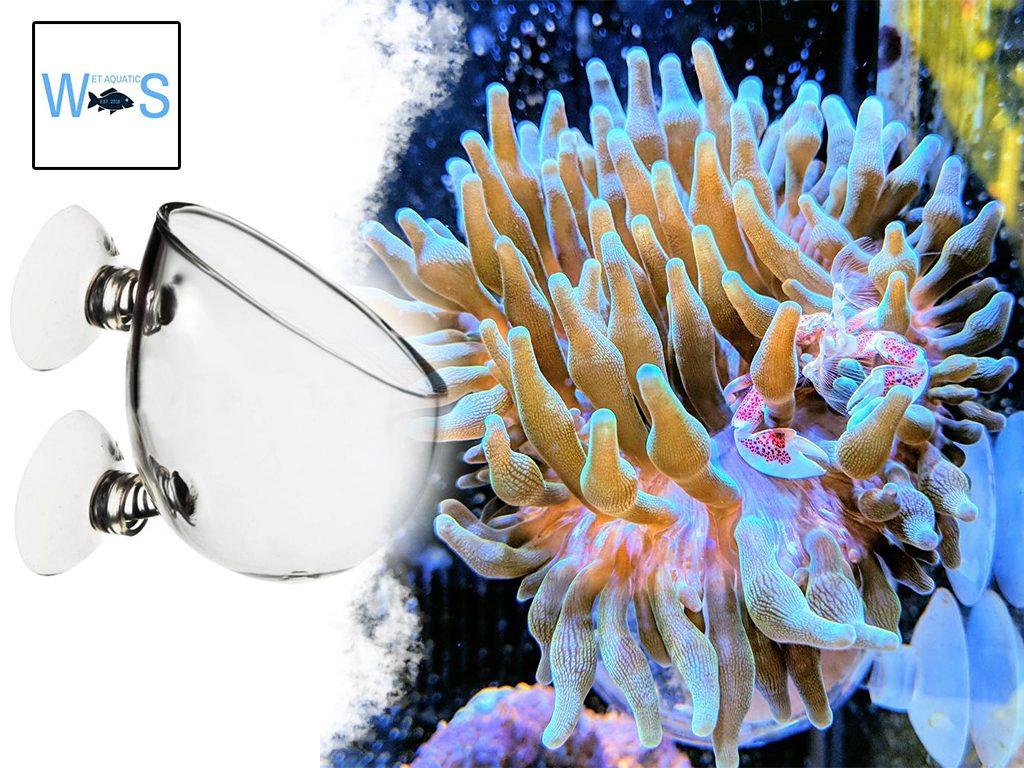 Copertina The Coral Tamer