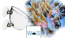 Coral Tamer potrebbe risolvere il problema della mobilità degli anemoni