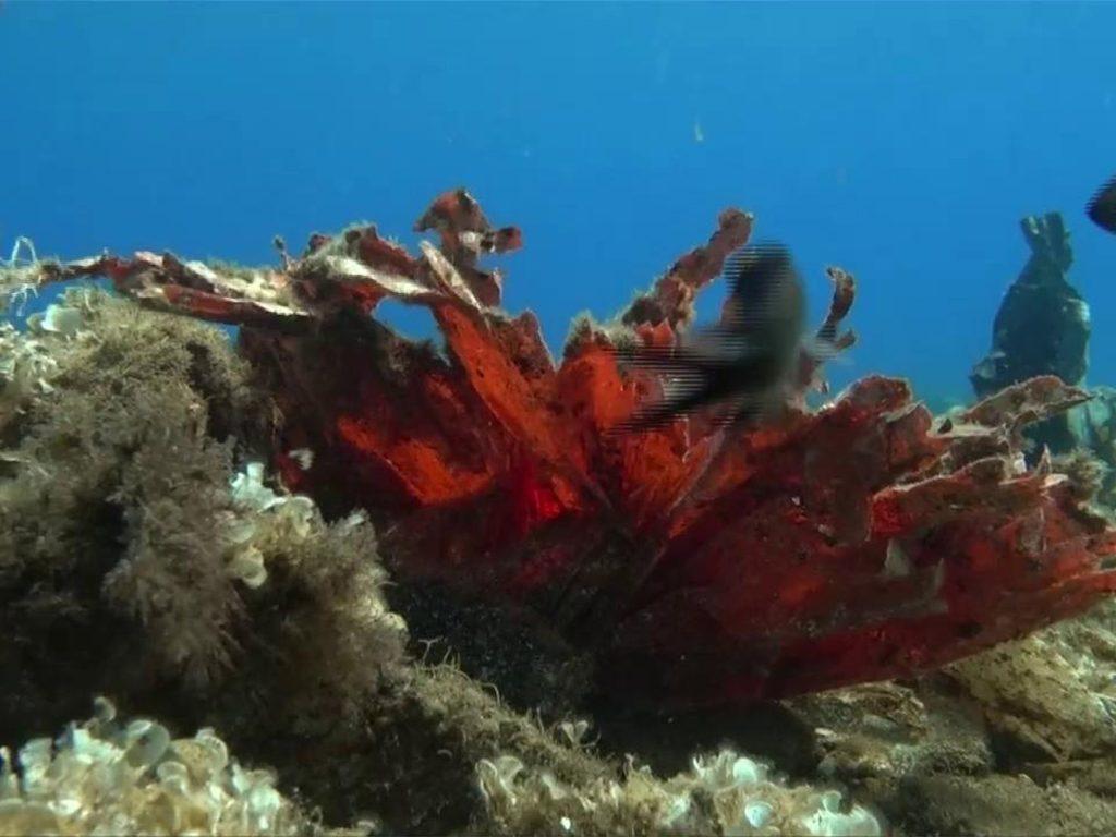 Plastica al largo dell'isola greca di Andros