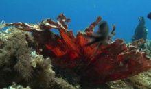 Un fondale di coralli di plastica