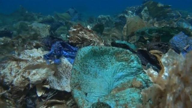 Una barriera corallina di sacchetti di mlastica