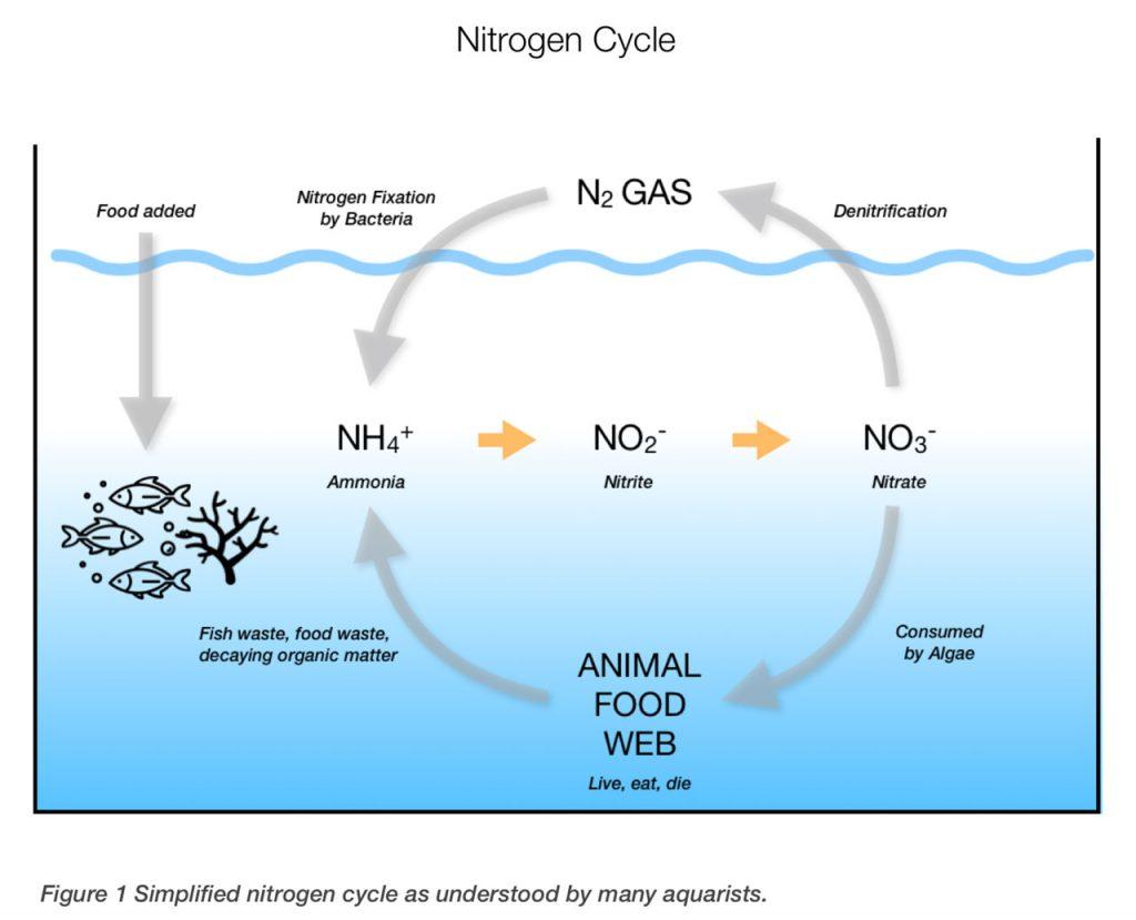 I rapporti Triton C:P:N permettono di gestire al meglio gli acquari marini: qui il ciclo dell'azoto