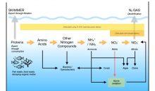 I nuovi rapporti Triton P:C:N permettono di gestire al meglio gli acquari marini