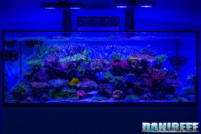 L'incredibile acquario marino di SPS di Marco Vank - Reportage - layout vista frontale