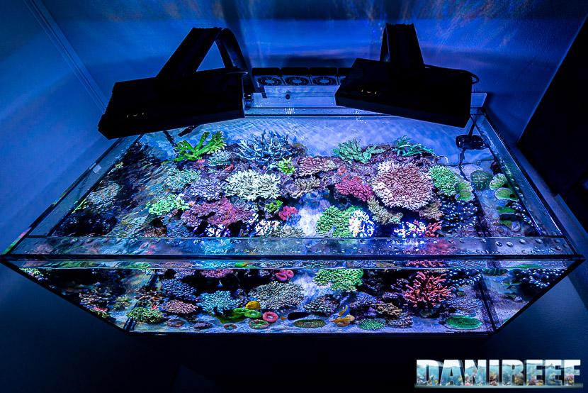 L'incredibile acquario marino di SPS di Marco Vank - Reportage - layout
