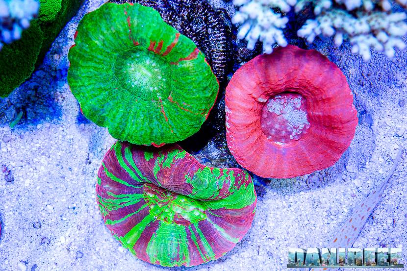 L'incredibile acquario marino di SPS di Marco Vank - Reportage - Scolymie