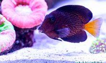 Blocco esportazioni Hawaii, 7 pesci che non vedremo più in vendita