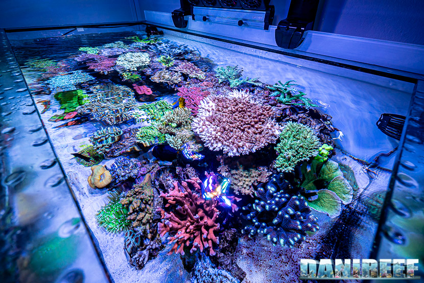 L'incredibile acquario marino di SPS di Marco Vank – Reportage