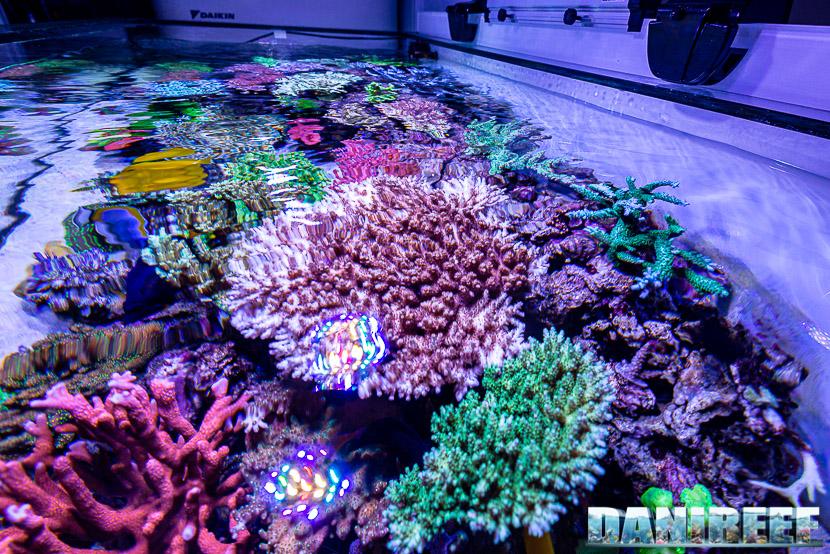 L'incredibile acquario marino di SPS di Marco Vank - Reportage