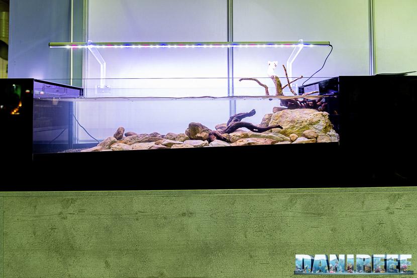 Acquari Malberti presenta un acquario che riproduce una sezione di fiume