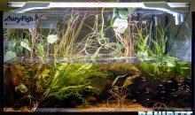 Acquario biotopo: conosciamolo assieme e vediamo come allestirlo