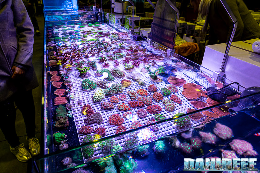 Acquarissima 2000: coralli, meduse e novità in mostra al PetsFestival: Talee di corallo