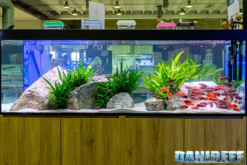 In questa foto potete ammirare un bellissimo acquario allestito per ciclidi africani con Microsorum al Petsfestival 2019