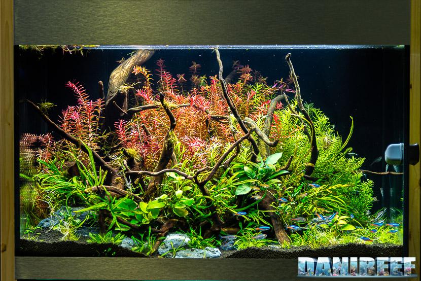 L'importanza delle piante in acquario