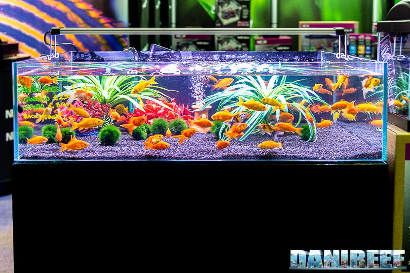 Newa torna al PetsFestival in grande stile e sponsorizza il Centropyge Show: pesci rossi by Oceano
