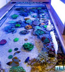 L'incredibile vasca shallow di coralli al PetsFestival 2019