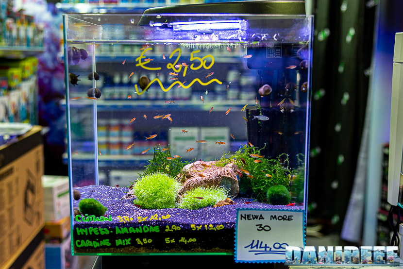 Newa torna al PetsFestival in grande stile e sponsorizza il Centropyge Show: newa more 30 by Oceano