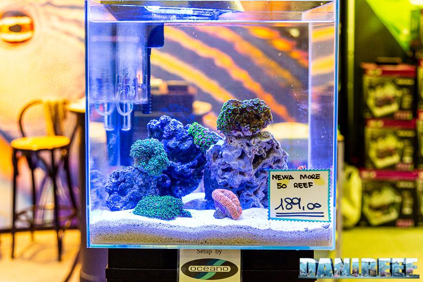 Newa torna al PetsFestival in grande stile e sponsorizza il Centropyge Show: newa more 50 reef by Oceano