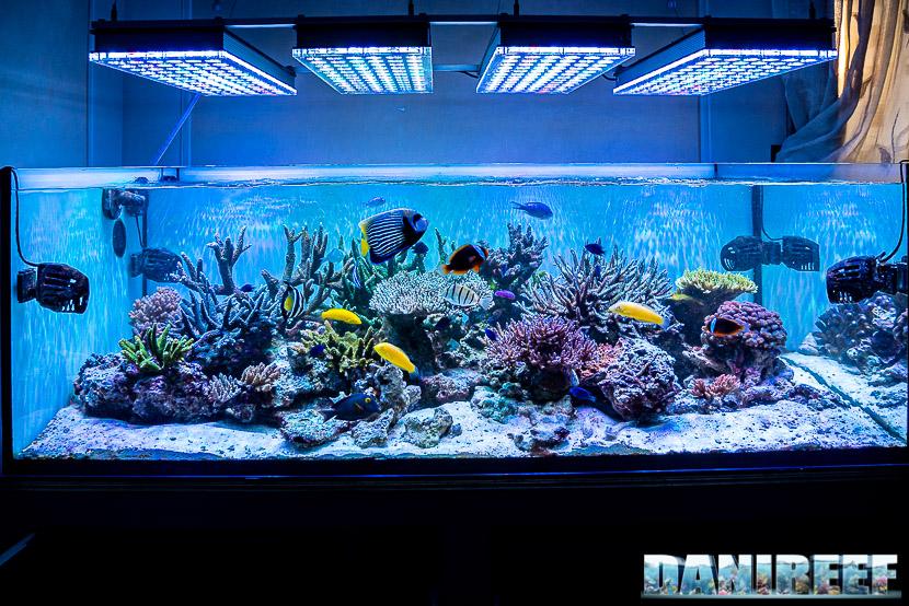 ATB Medium Size 25 - recensione dello schiumatoio da oltre 1300 l/h d'aria: l'acquario di Jonathan