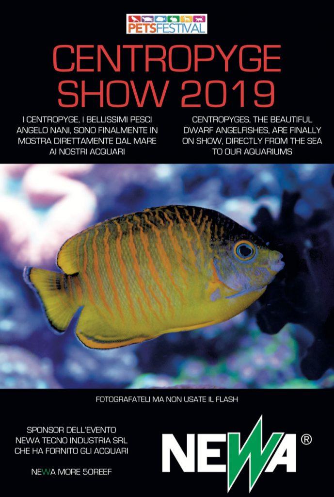 Il Primo Centropyge Show in Italia, in mostra al PetsFestival 2019