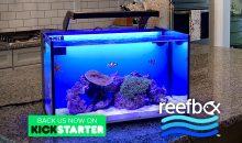 TheReefbox™ un nuovo acquario All-in-One con sfondo retroilluminato