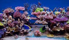 Lo splendido acquario di Pawel Szember è la vasca del mese di ottobre su ZEOvit.com