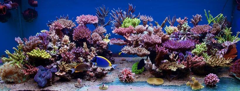 La splendido acquario di Pawel Szember è la vasca del mese di ottobre su ZEOvit.com