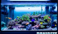 The Acropora wonderful aquarium with T5 from Giuliano Carafa