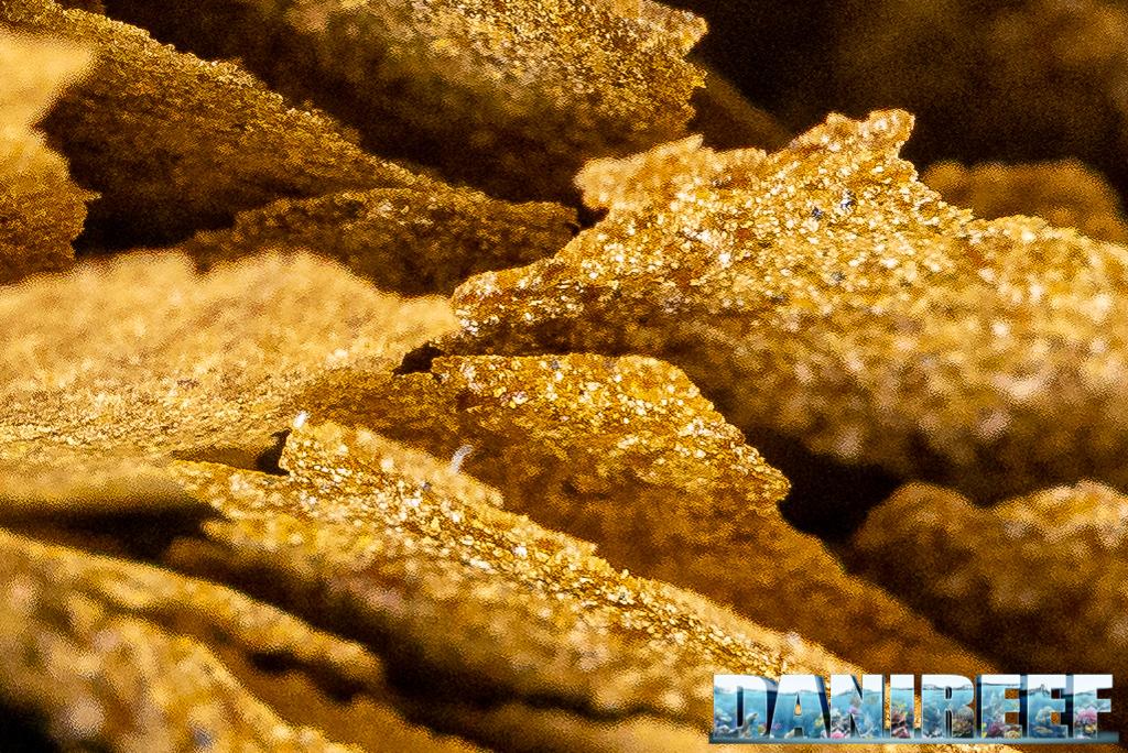 I nuovi mangimi Amtra della serie PRO: Natural, Color e Vegetal Flake