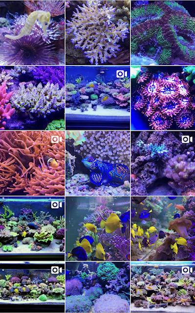 A.R.T.O. Apulia Reef Tank Owners nasce e cresce nella bellissima Puglia