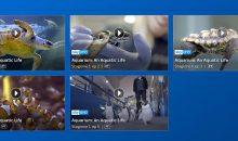 "Sky lancia la serie di documentari ""Aquarium: an aquatic life"""