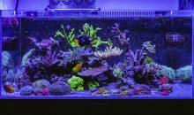 L'acquario del mese secondo GHL