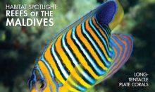 Reef Hobbyist Magazine con l'acquario di Federico Benvenuti