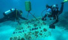 Il salvataggio della Barriera Corallina grazie ai coralli più resilienti si può fare?