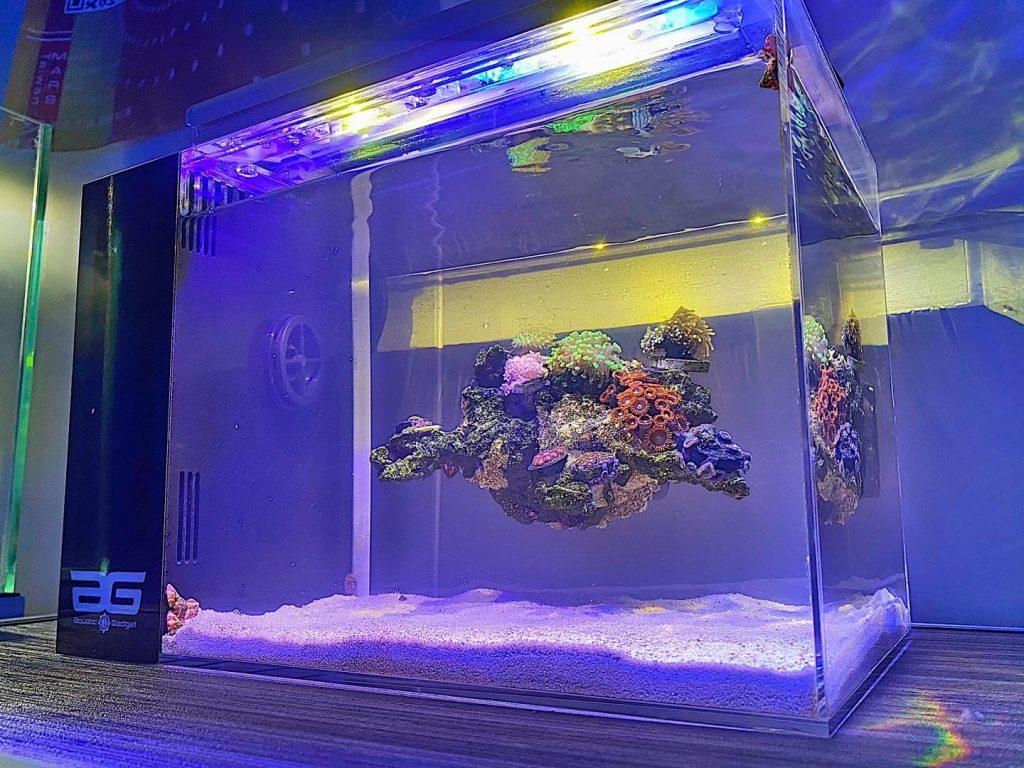 Volete una rocciata sospesa in acquario, da oggi si può!