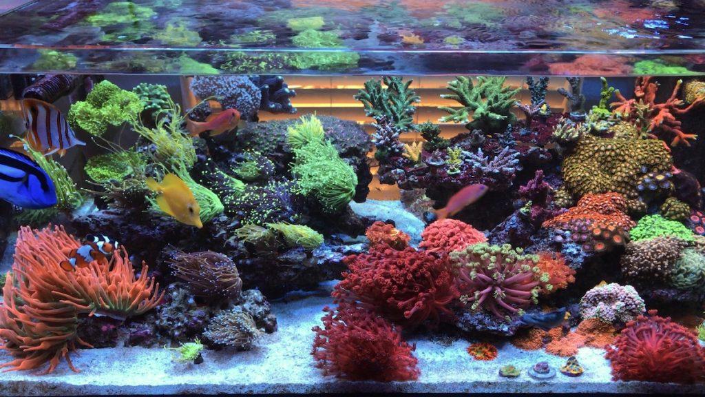 L'incredibile acquario di LPS di yaboikevin42 direttamente da instragram