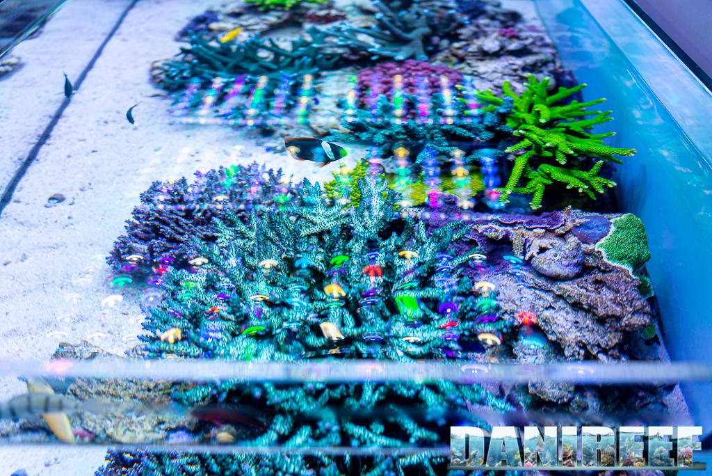 L'acquario marino di Jonathan Betti