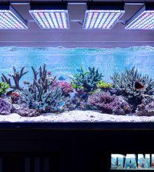 Il meraviglioso Acquario Marino del mese di Jonathan Betti da 600 litri