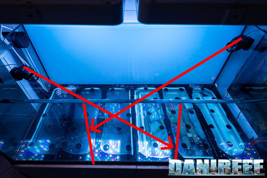 Il movimento in acquario marino: perché è così importante?